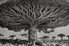 Merveilleux arbres